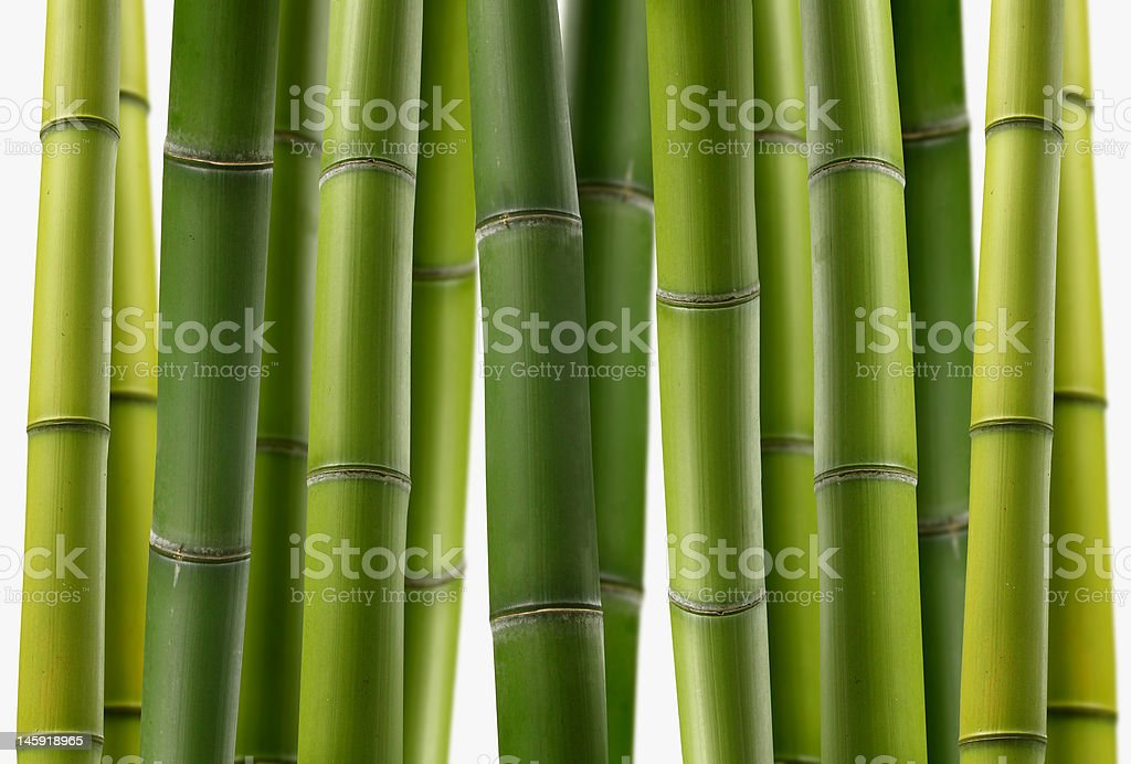 Bamboo Grove royalty-free stock photo
