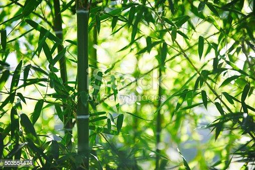 istock bamboo grove 503554474