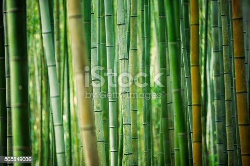 istock bamboo grove 505849036