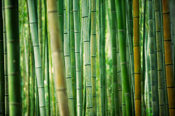 bamboo grove - japan pattern 個照片及圖片檔