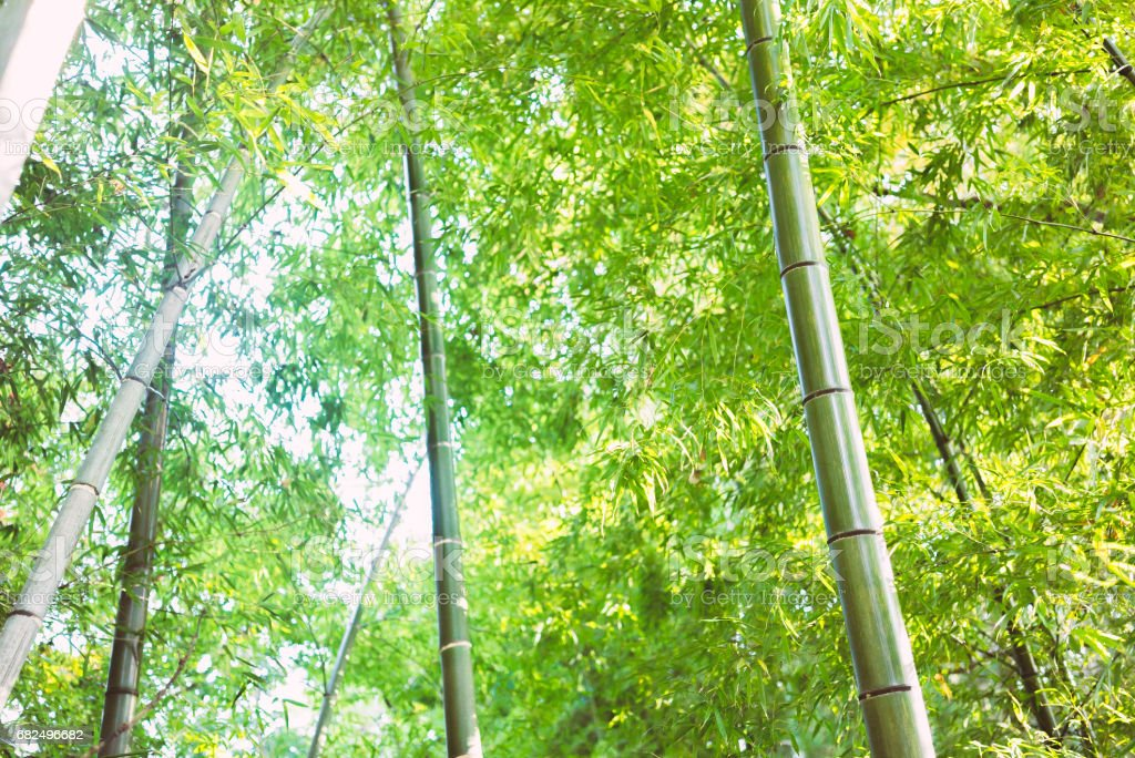 Bamboo grove foto stock royalty-free