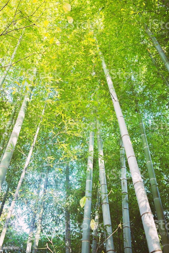 Bamboo grove Стоковые фото Стоковая фотография