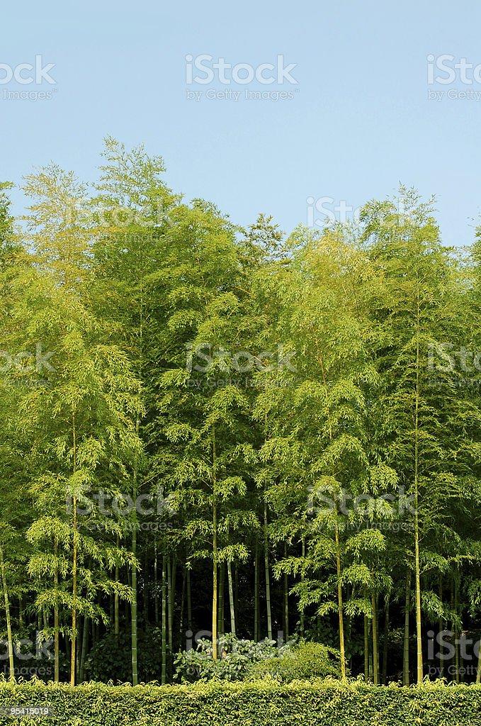 bamboo grove Lizenzfreies stock-foto