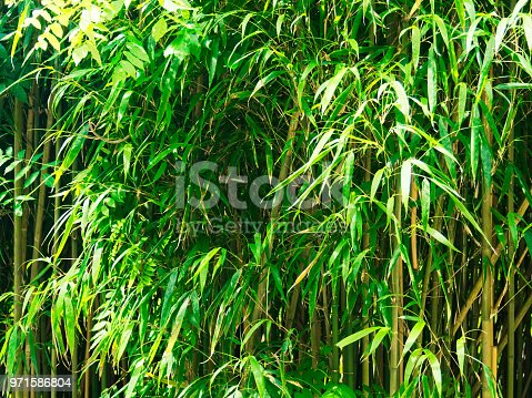 Close-up view of bamboo grove on sunny day