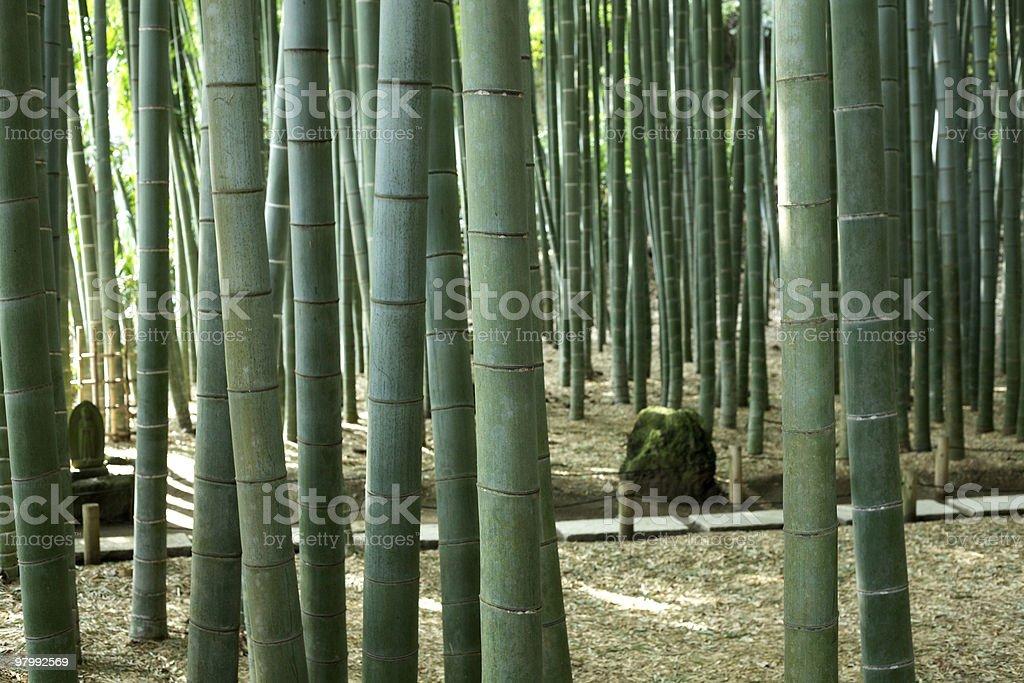 Bamboo Grove royalty free stockfoto