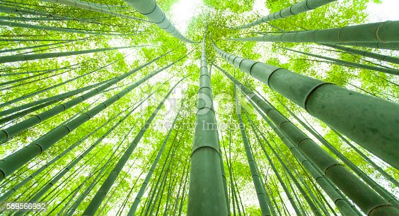 Bamboo forest, low angle view.  Shot taken during iStockalypse Kyoto 2016.