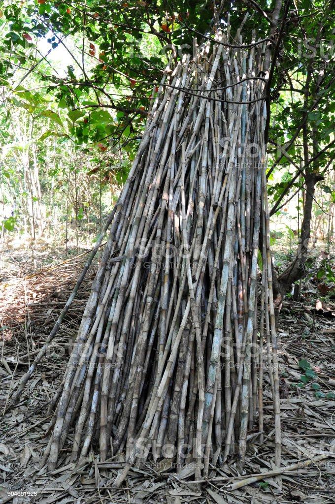 Bamboo Harvest, Phrae Province, Thailand royalty-free stock photo