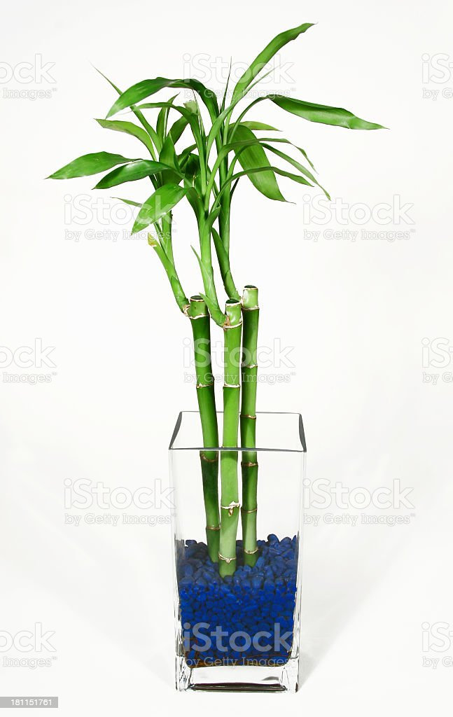 Bamboo In Glass Vase With Blue Rocks Stock Photo More Pictures Of