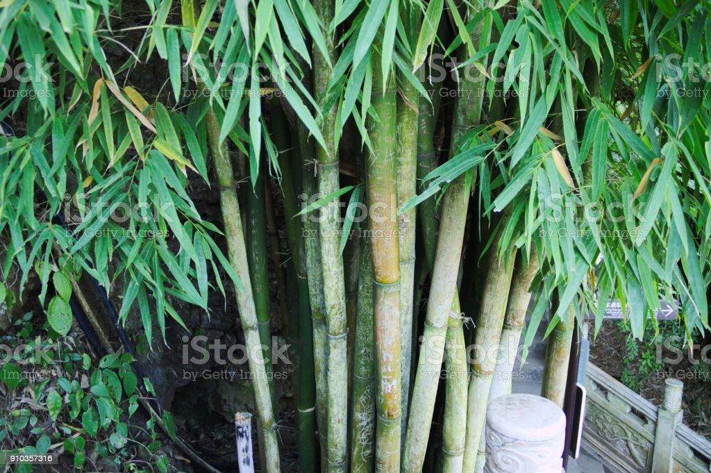 Bambu na rua (Kunming, Yunnan, China) - foto de acervo