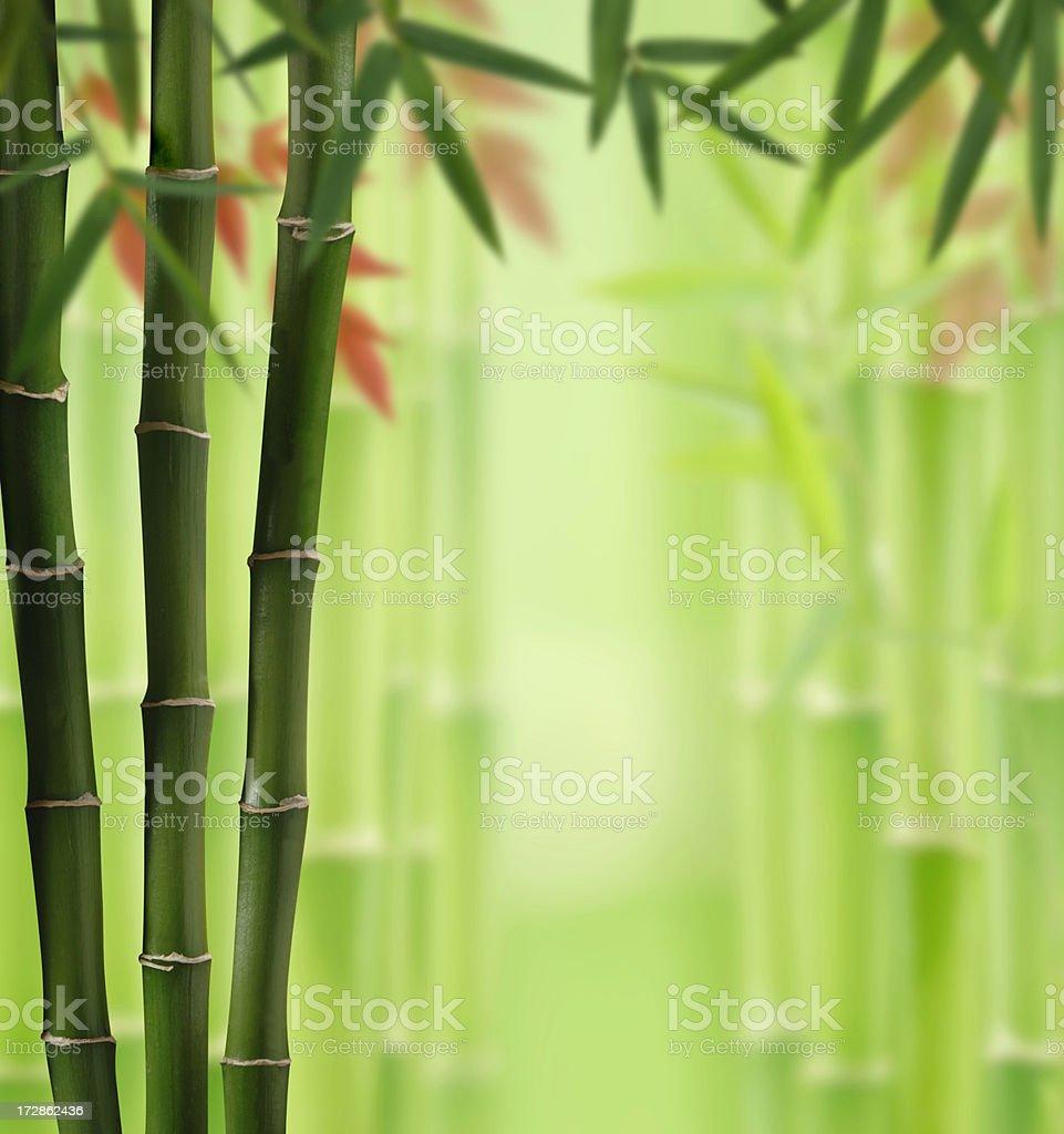 Bamboo Land stock photo