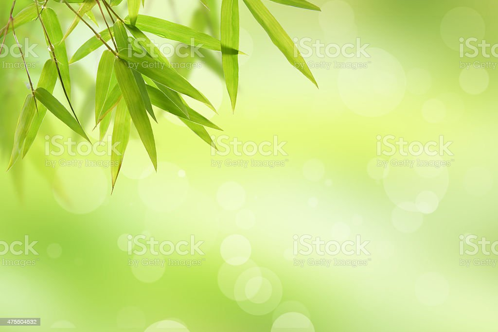 bamboo leaf and abstract green background bokeh stock photo