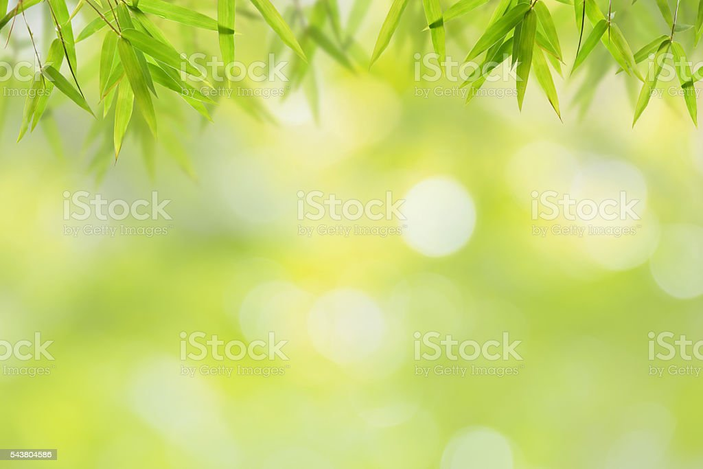 Bamboo leaf and soft green bokeh background stock photo