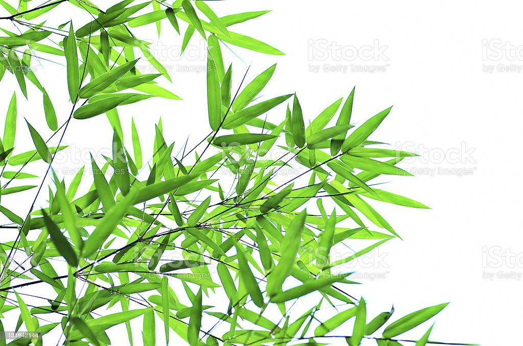 La Foglia Di Bamb.Foglia Di Bambu Filiali Fotografie Stock E Altre Immagini Di Armonia