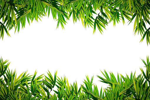 Bamboo leaf frame isolated on white