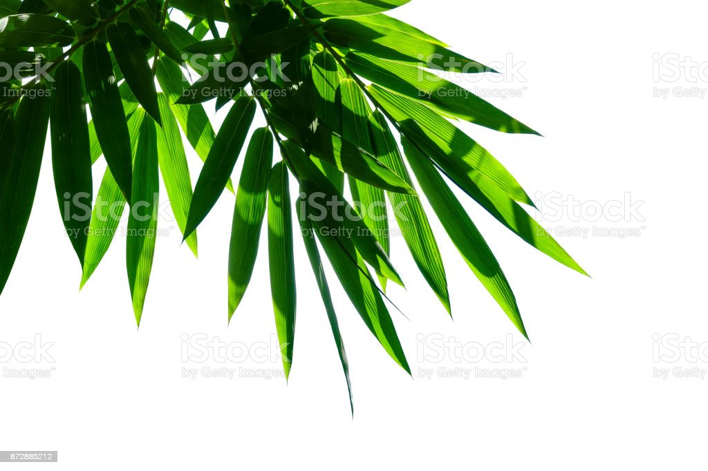 bamboo leaf isolated on white – zdjęcie