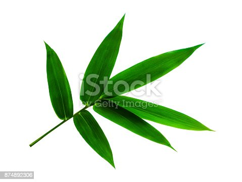 Green bamboo leaf isolated on white background