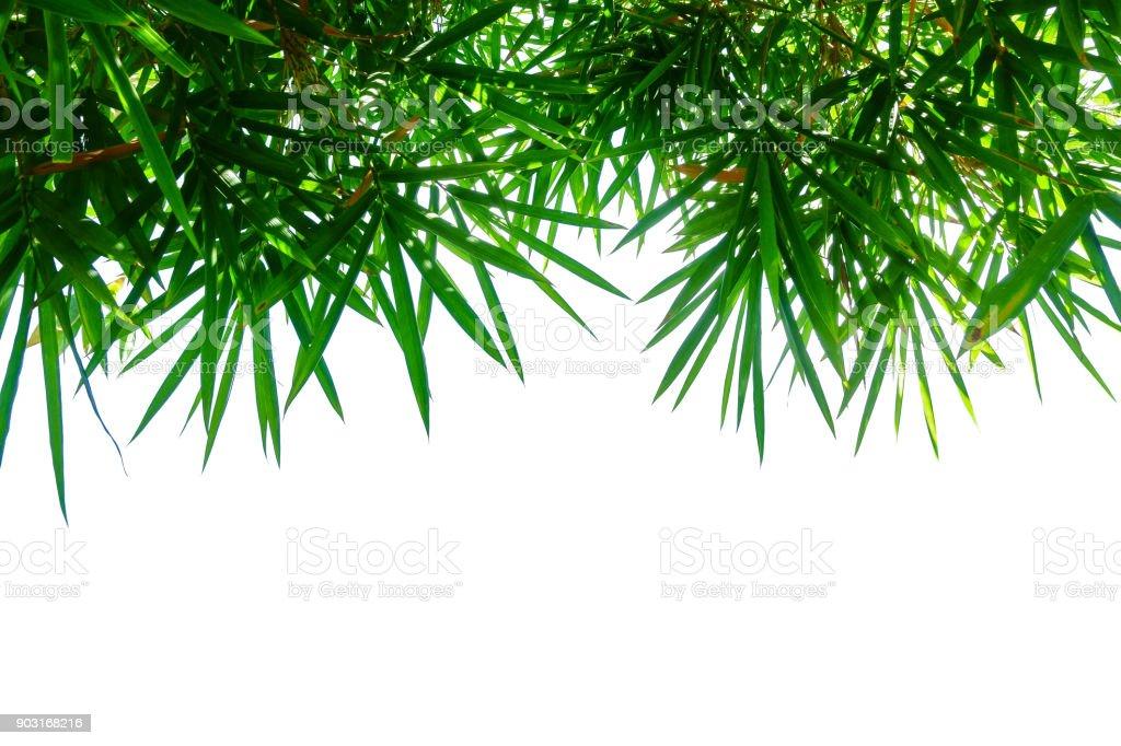 bamboo leaf isolated on white stock photo