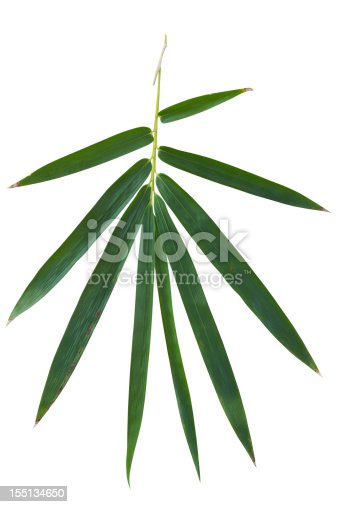 Fresh bamboo leaf isolated on white, including a clipping path for easy selection.