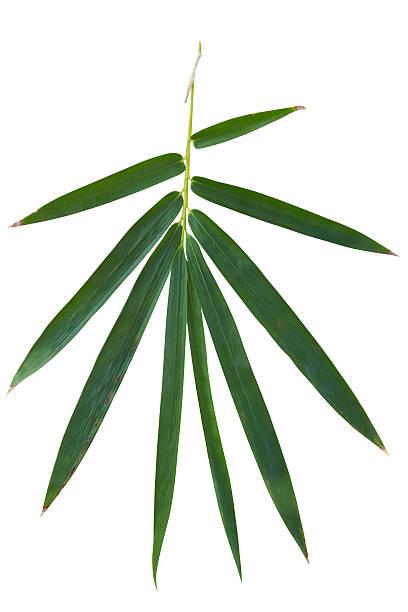 Bamboo leaf, isoliert auf weiss Mit clipping path – Foto