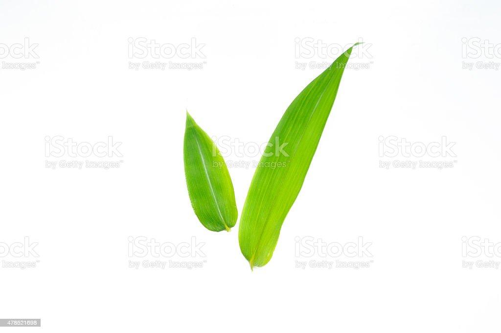 笹の葉/Bamboo leaf stock photo