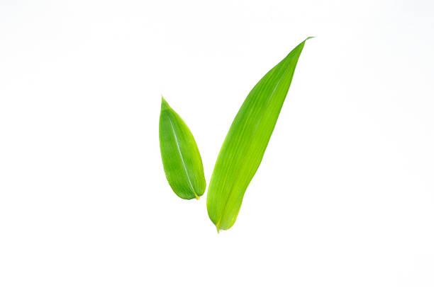 笹の葉 / Bamboo leaf – Foto