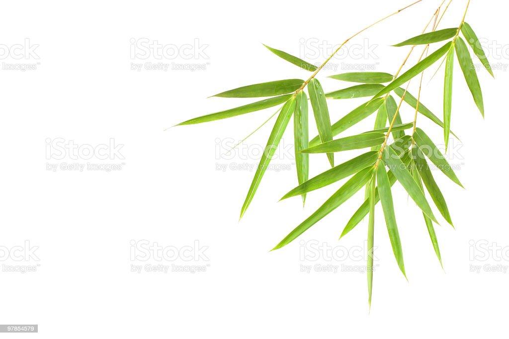 bamboo leaf royalty-free stock photo