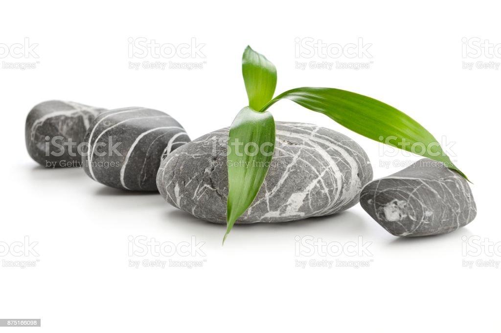 Feuille de bambou, Spa stones sur fond blanc - Photo