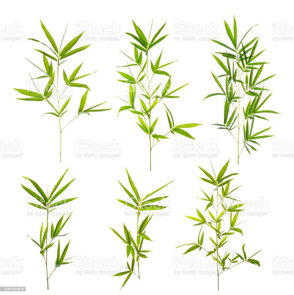Bambusblatt mit Beschneidungspfad isoliert auf weiss – Foto