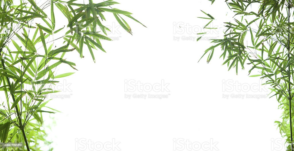 bamboo leaf with copy space stock photo
