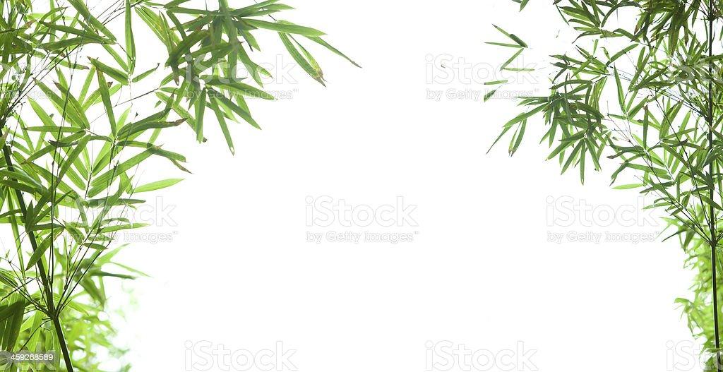 Bambusblatt mit Textfreiraum – Foto