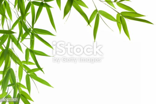 bamboo leaves border,isolated on a white background