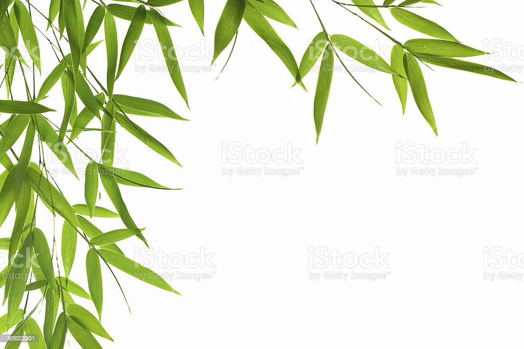 Bamboo leaves along the left side of a white background stock photo