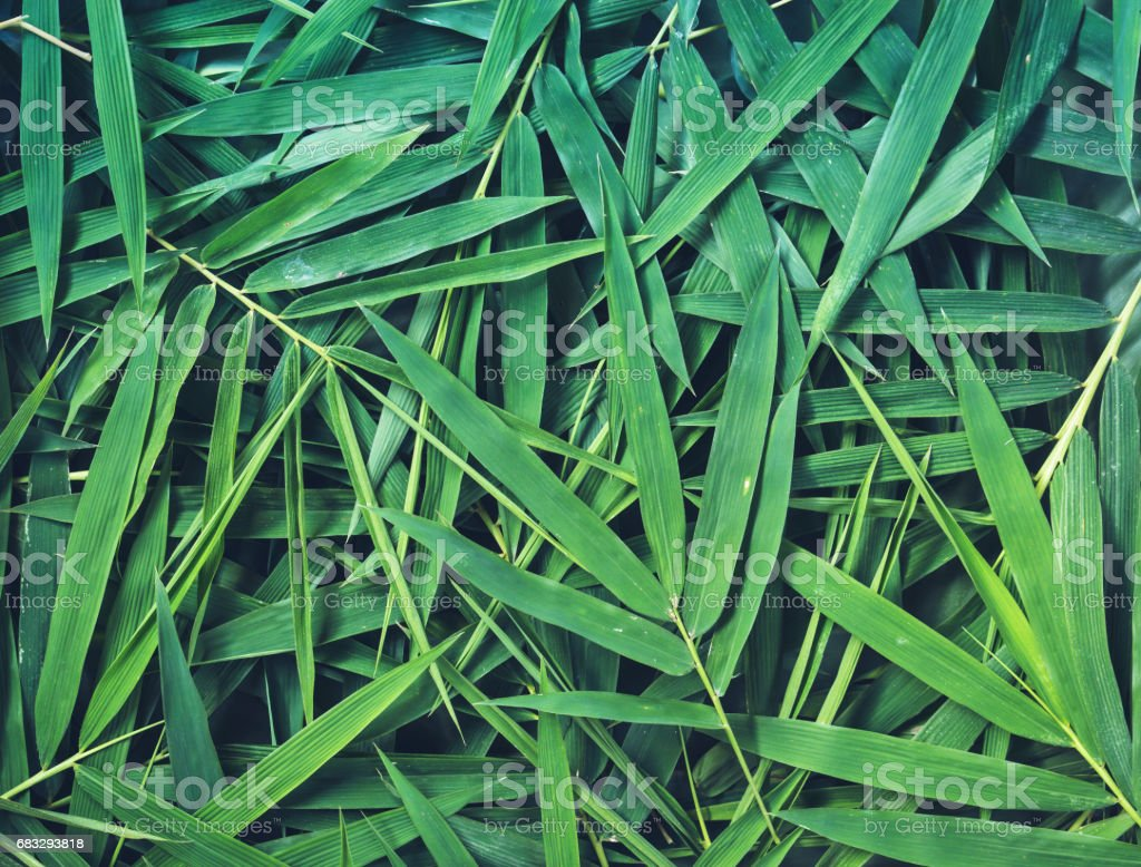 bamboo leaves background – Foto