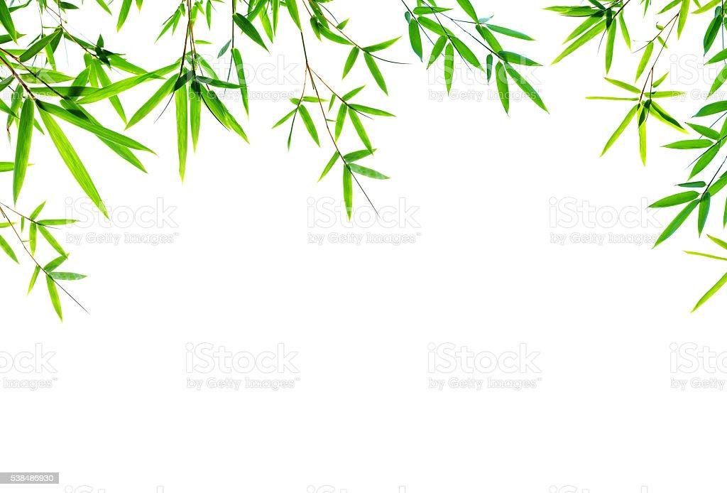 Bamboo leaves frame isolated on white background stock photo