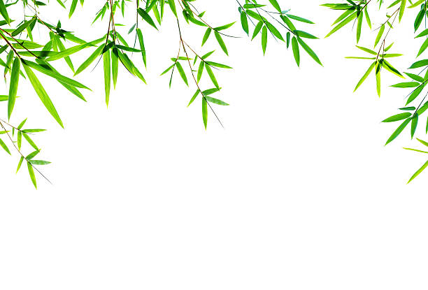 Bambus Blätter Rahmen isoliert auf weißem Hintergrund – Foto
