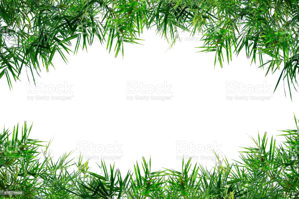 Bamboo leaves frame isolated on white stock photo