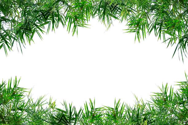 Cadre de feuilles de bambou isolé sur blanc - Photo