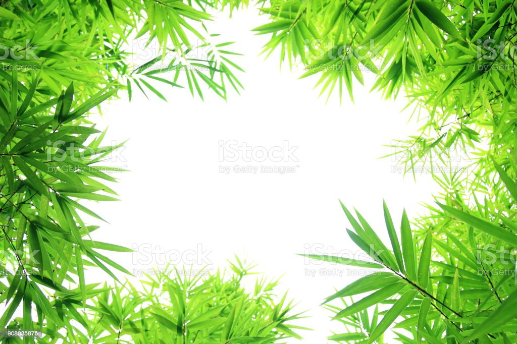 Bamboo leaves frame stock photo