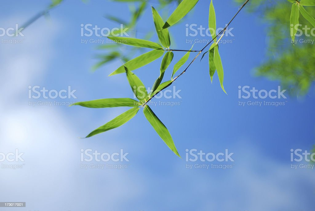 Bamboo Leaves in blue sky royalty-free stock photo