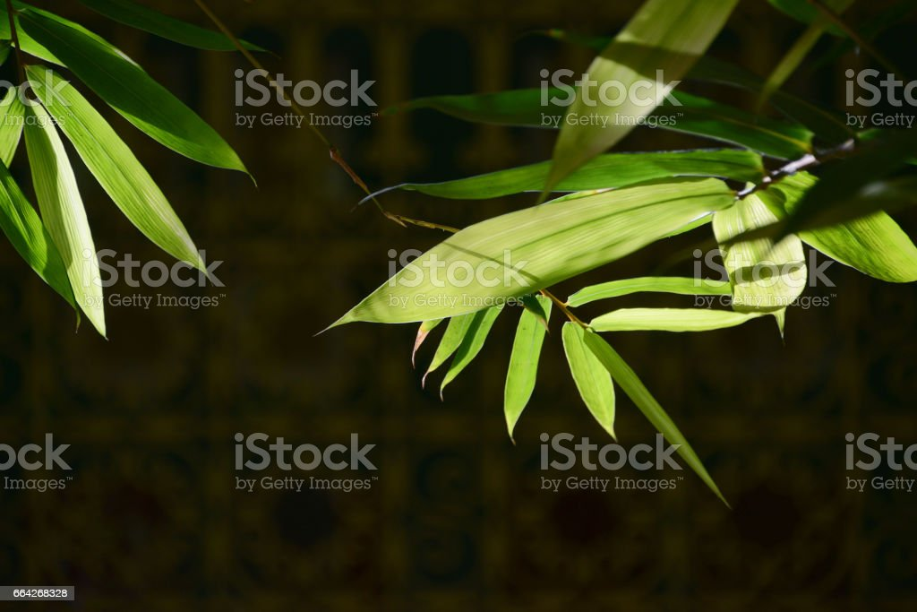 Bamboo leaves in the rays of the bright sun against the background of the Arabian ligature stock photo