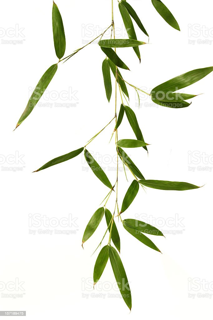 Bamboo leaves isolated in white royalty-free stock photo