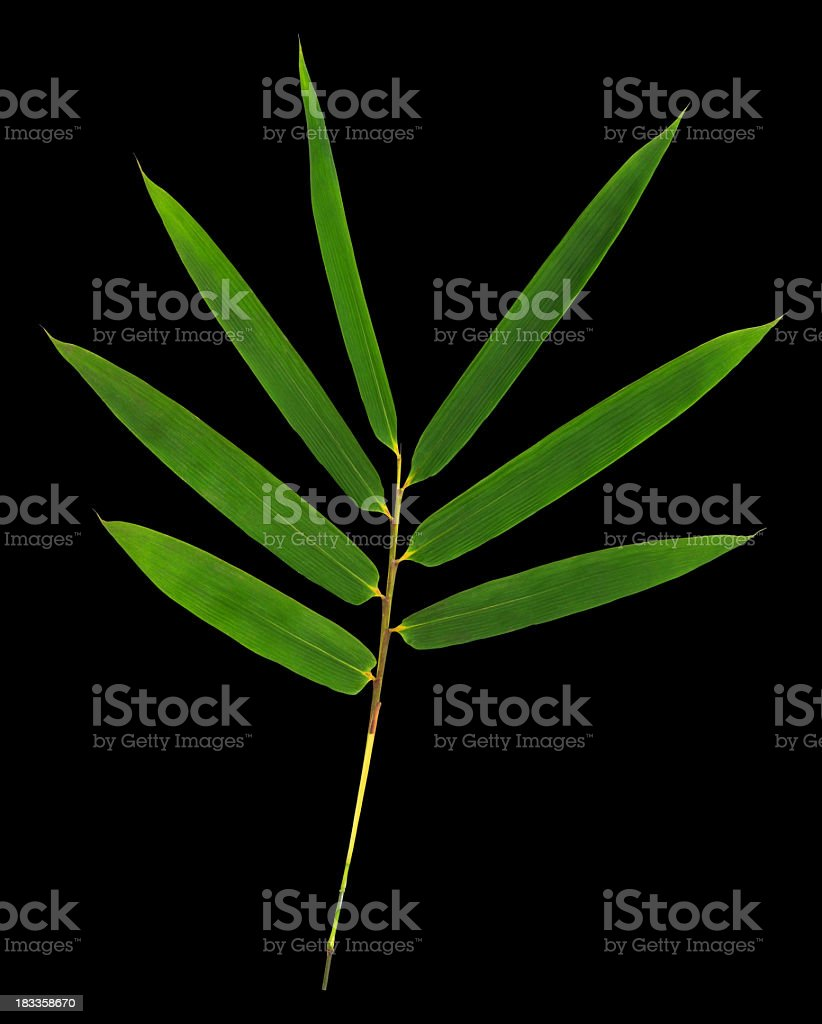 Bamboo leaves isolated on black with clipping path. stock photo