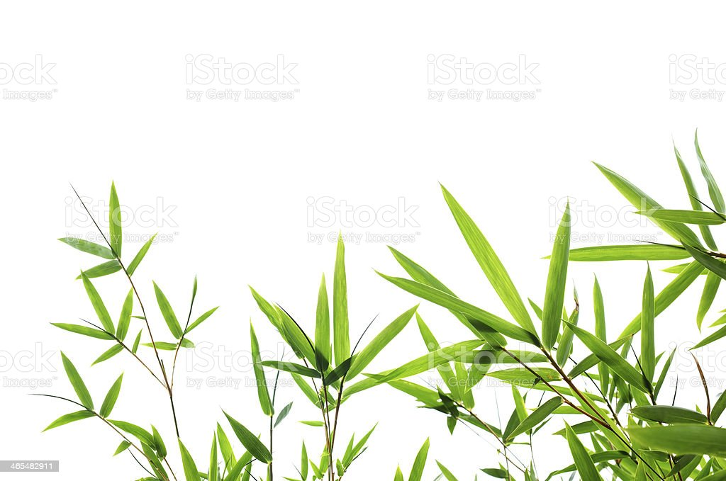 Bamboo leaves isolated on white background stock photo