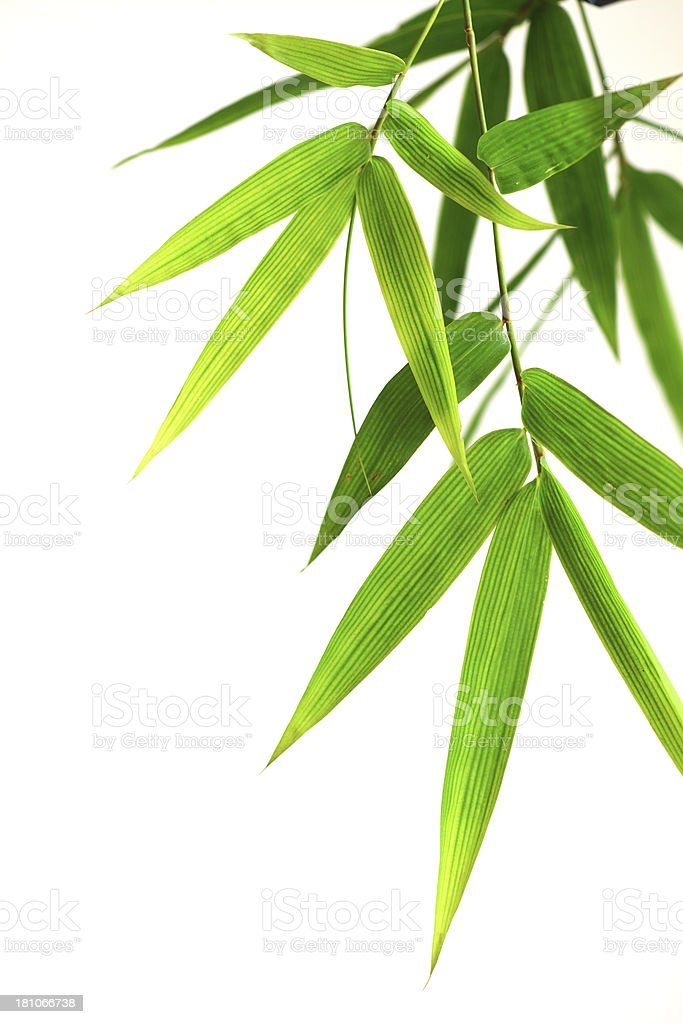 Bamboo leaves isolated on white stock photo