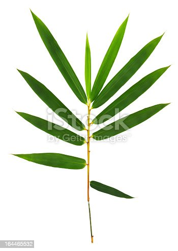 Bamboo leaves isolated on white with clipping path.