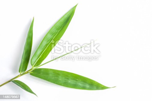 Bamboo Leaves isolated white background.