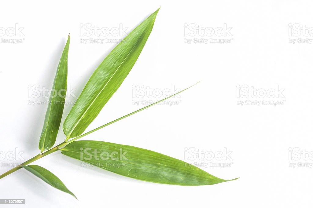 Bamboo Leaves isolated white background. stock photo