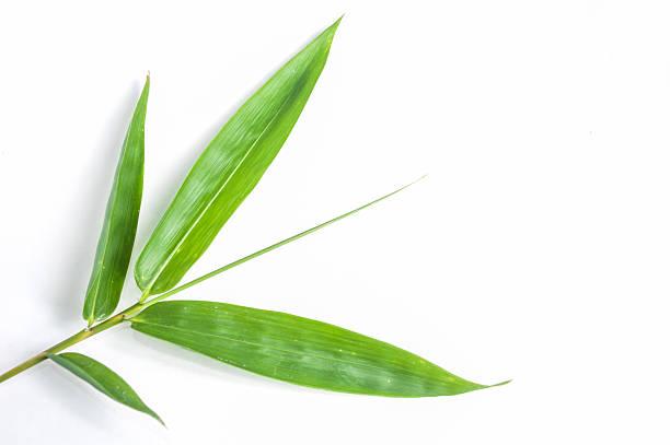 Bambus-Blätter isoliert Weißer Hintergrund. – Foto
