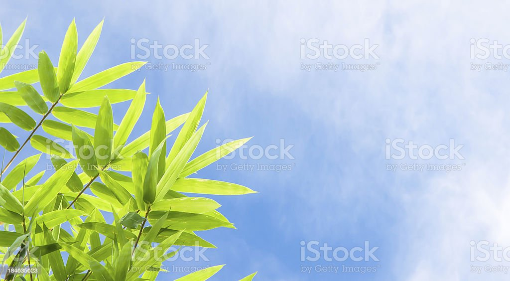 Bamboo leaves on blue sky stock photo