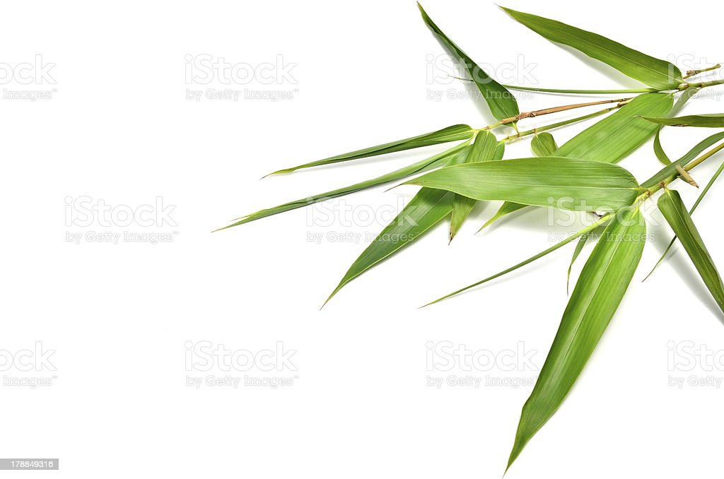 bamboo- leaves stock photo